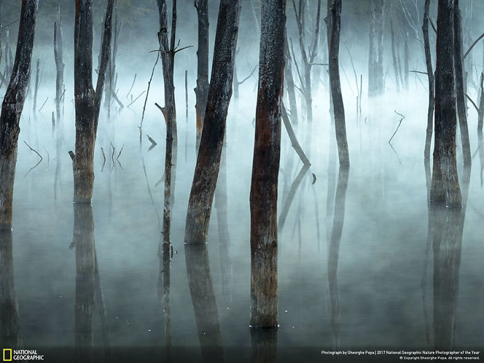 Honorable Mention, Landscapes: Cold And Misty, Gheorghe Popa