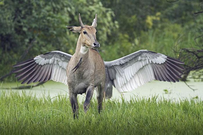 ¿Cómo llamarías a este animal?