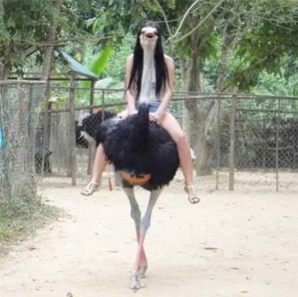 Miss Ostrich, 10 фотографий сделанных в нужный момент