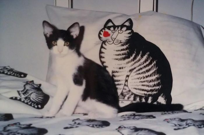 Copycat!