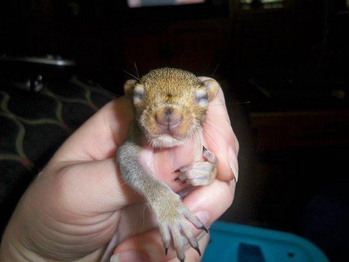 squirrel-come-back-save-family-bella-brantley-harrison-33