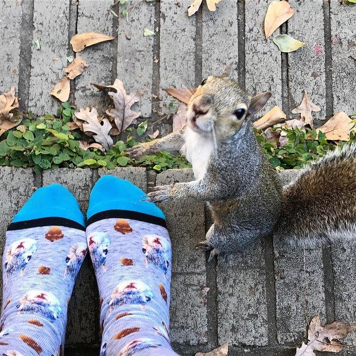 squirrel-come-back-save-family-bella-brantley-harrison-5