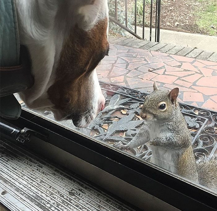 This Squirrel Keeps Coming Back To Visit The Family That Saved Her 8 Years Ago