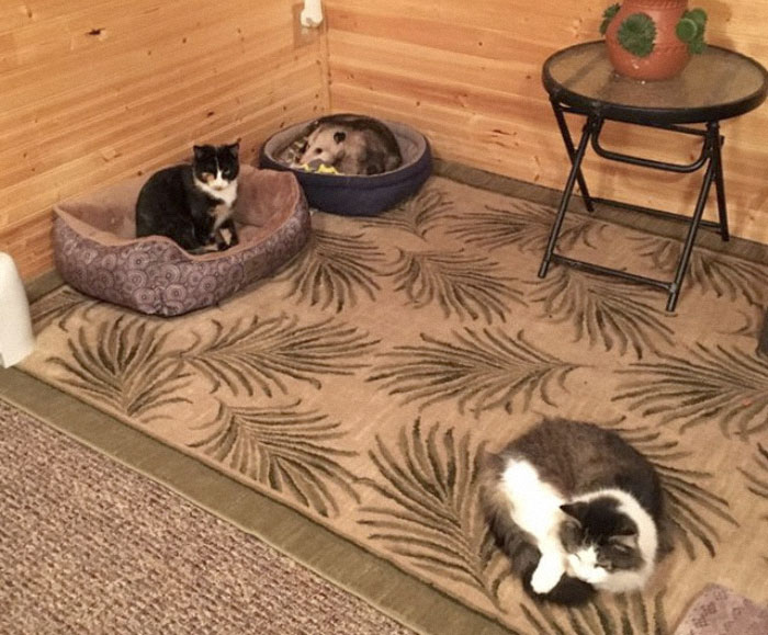 Grandma Thinks She's Been Taking Care Of Three Kittens Until Her Grandson Notices One Of Them Is Not A Kitten At All