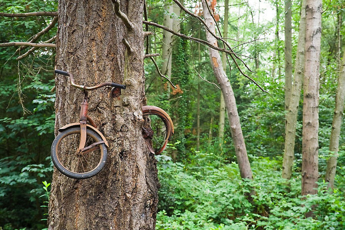 A Bicycle Was Left Chained To A Tree
