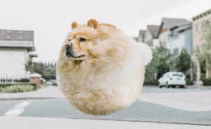 I Transform Real-Life Animals Into Round Ball Creatures