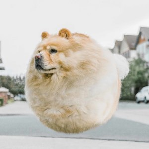 What If All Animals Were Round