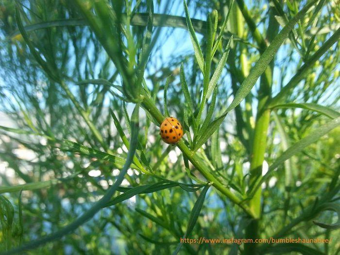 My Beautiful Bee's And Buggies!