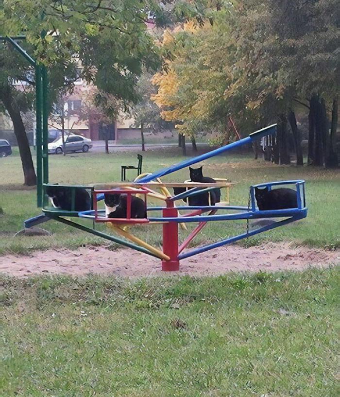 He visto esto en el parque