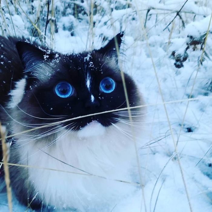 Our Cat Experiencing The First Snow Of The Year!
