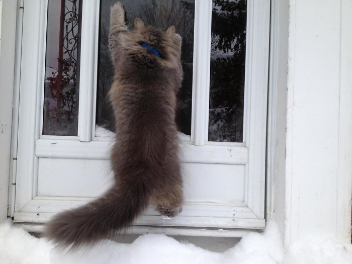My Cat's First Time In The Snow