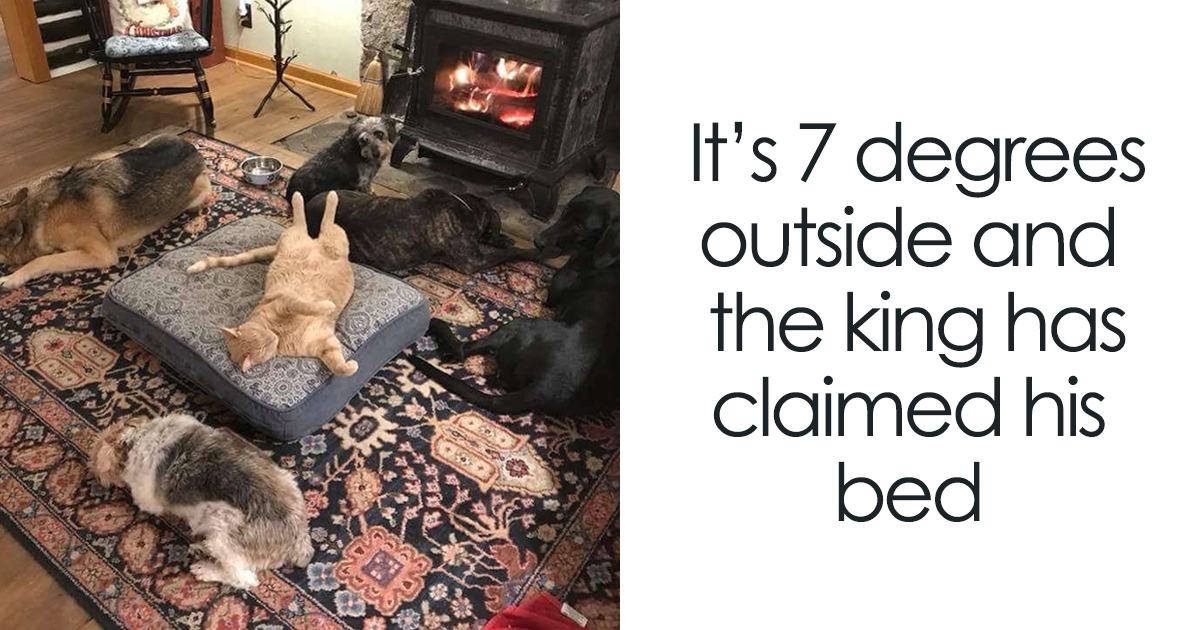 119 Asshole Cats Who Stole Dog Beds And Didn't Give A Damn About The Pawlice