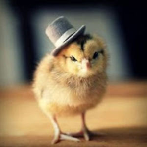 Mr.Duck with a top hat