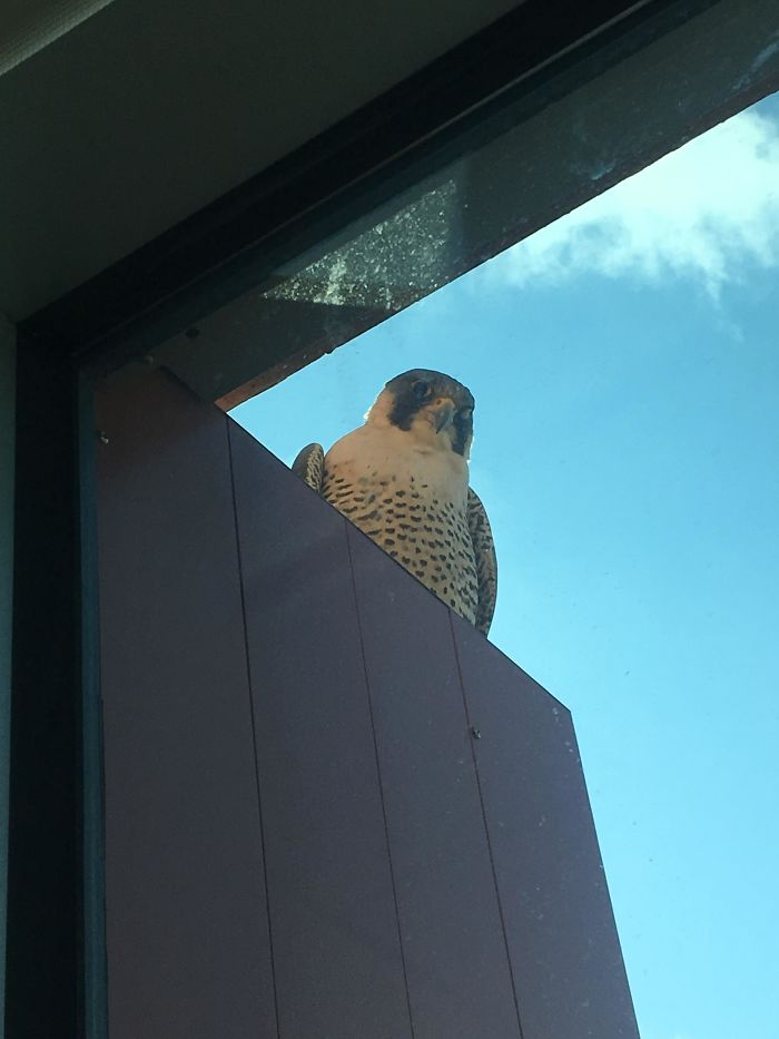 I Too Have A Feathered Friend Who Hangs Out By My Window