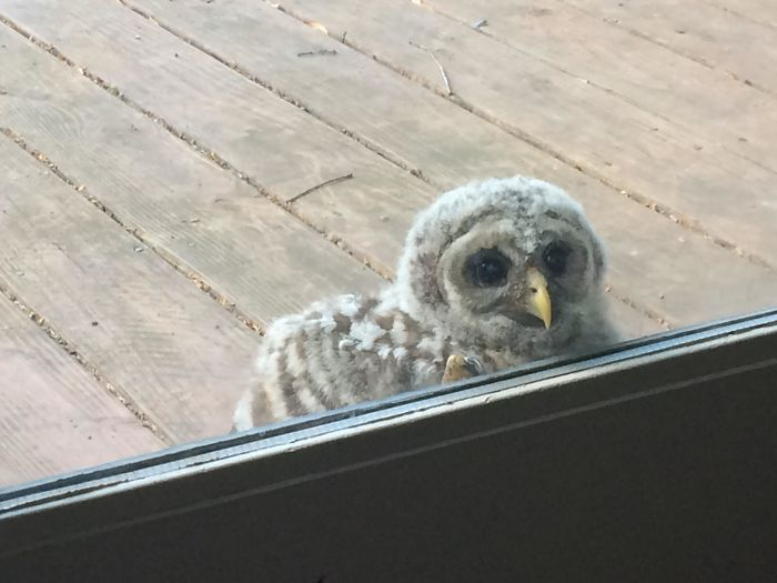 A Baby Feathered Visitor Says Hello!