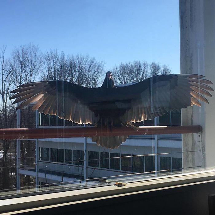 My Sister's Office Features This Giant Friend Outside The Window. Most Days He Watches And Stares. Today He Tried To Either Intimidate Her... Or Give Her A Hug