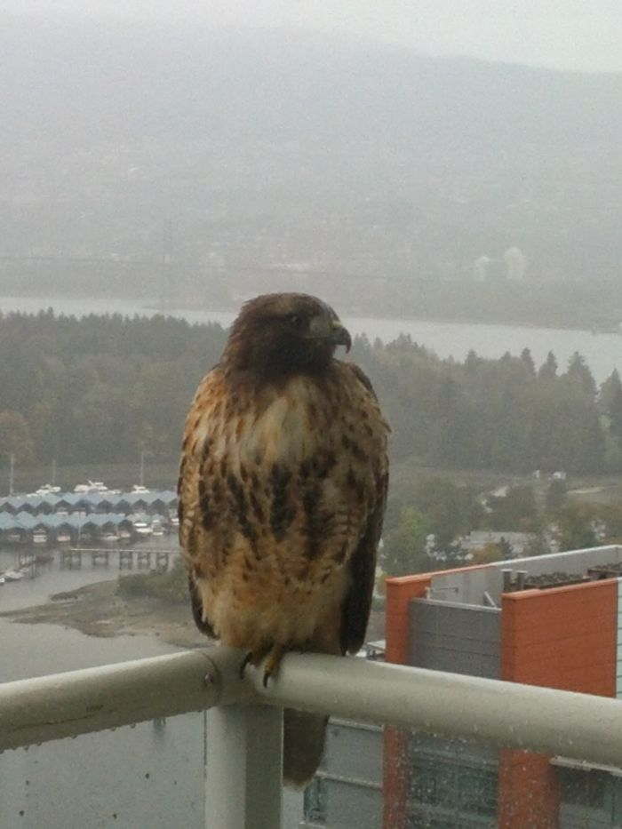 My Feathery Friend Comes And Joins Me On The 34th Floor!