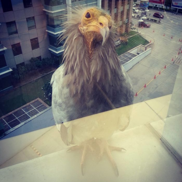 So This Bird Is Sitting On My Window Panel At Work Right Now