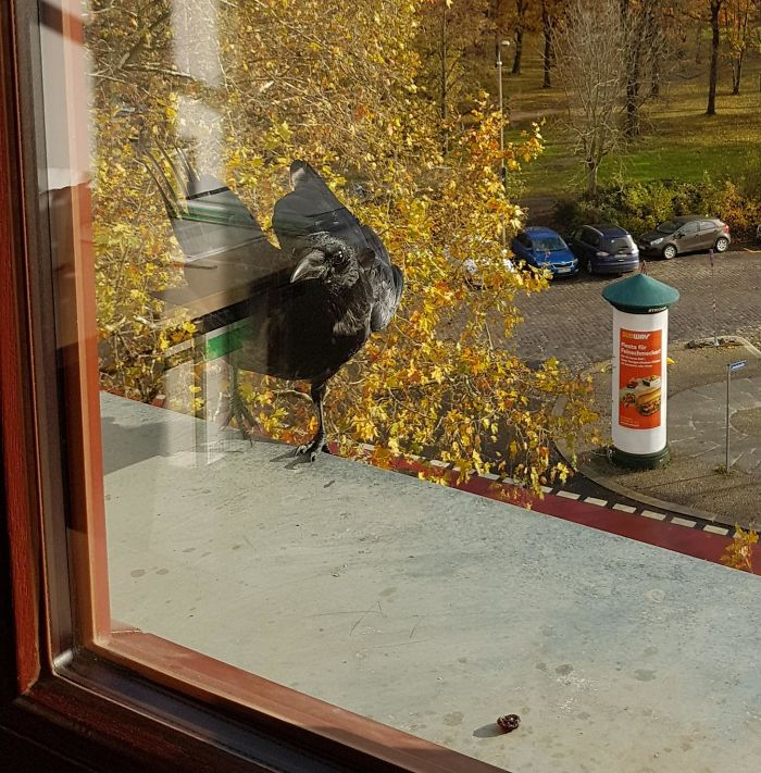 News From Basil. My Inofficial Office Crow