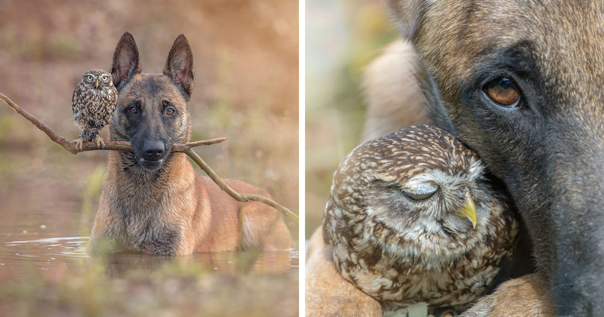 These 50 Photos Of Ingo The Dog And His Owl Friends Is The Only Thing You Need To See Today
