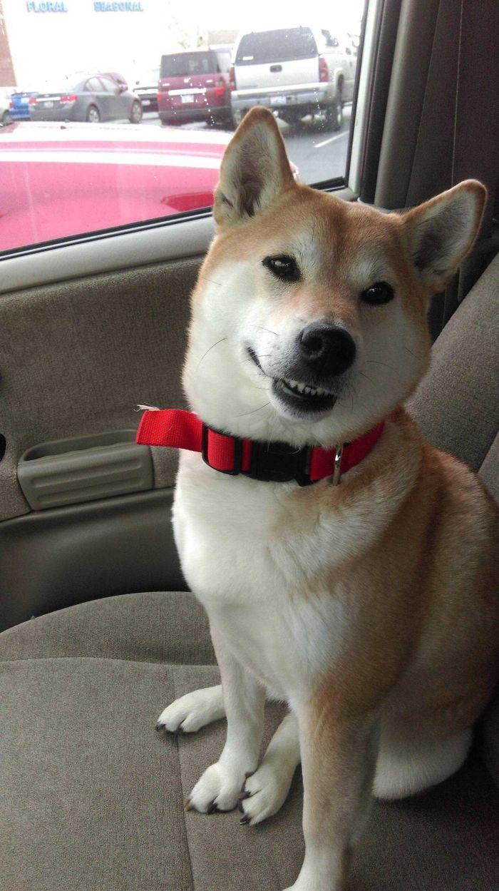 Le dije que fuera valiente en el veterinario y me ha puesto esta cara