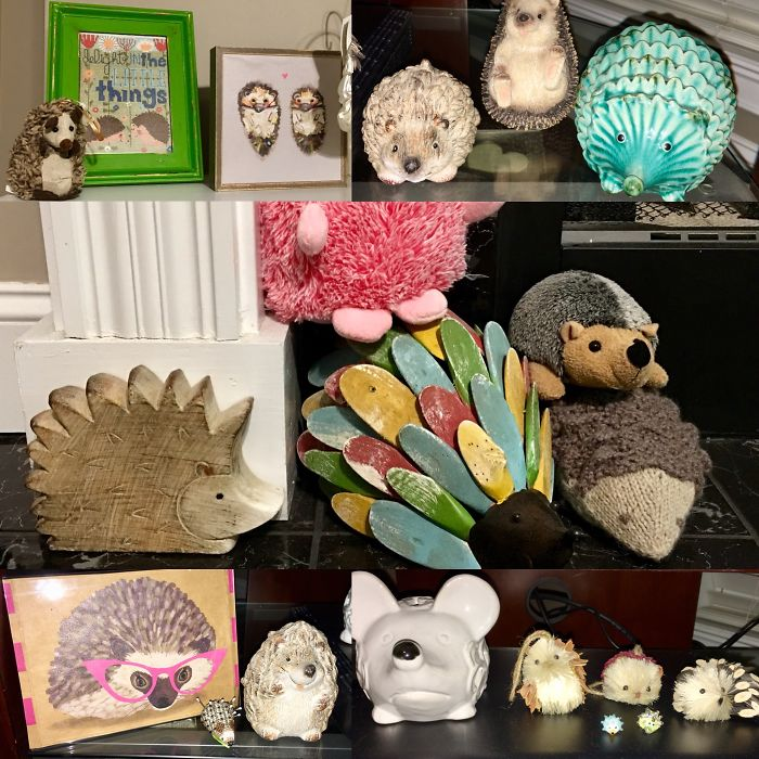 I Collect Hedgehogs...including Our Real One!
