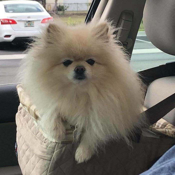 Einstein-Bros-Bagels-Drive-Thru-Dogs