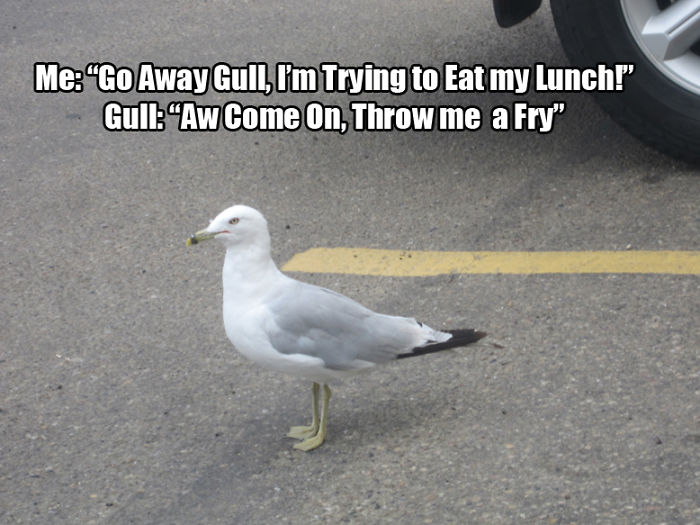 Lunch Convo With A Gull