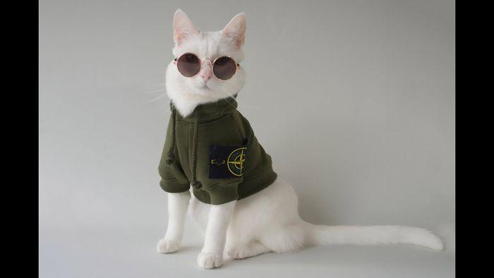 Meet Instagram's Most Streetwear-Savvy Pet, Zappa The Cat
