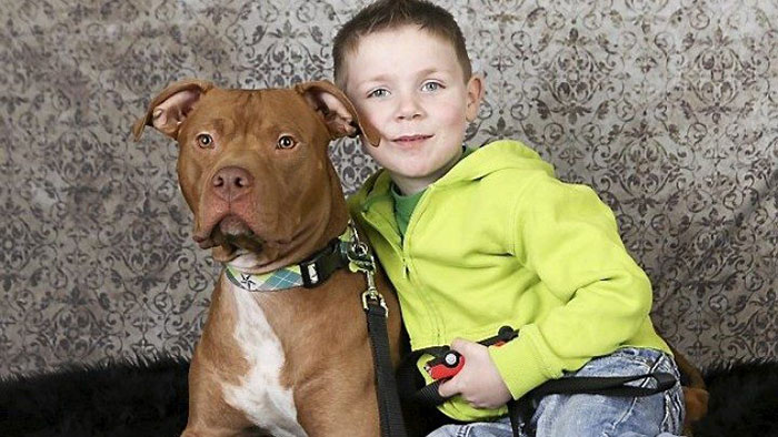 A Woman Saved A Pit Bull Just Hours Before He Was Scheduled To Be Euthanized And Less Than A Week Later It Returned The Favor When He Helped Save Her 4-Year-Old Son