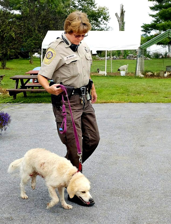 Man Was Walking With His Yellow Lab-Mix Henry When They Were Confronted With Two Cubs And A Larger Black Bear. The Dog Saved His Owner Life By Attacking The Bear While He Kept Striking It With A Rock. They Were Able To Escape, But Both Suffered Serious Injuries