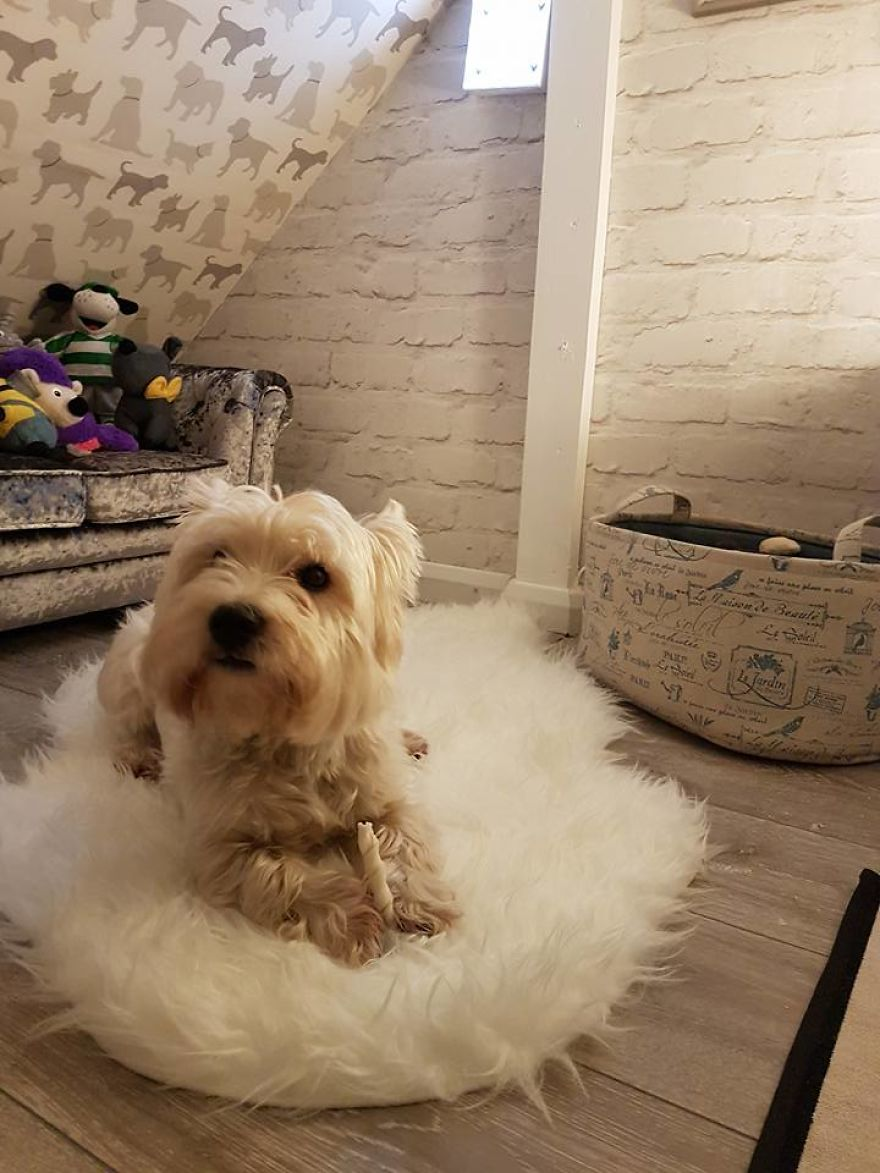 Our Dog Was Getting A Human Sister, So I Built Her A Room Under The Stairs – It Turned Out Better Than Expected