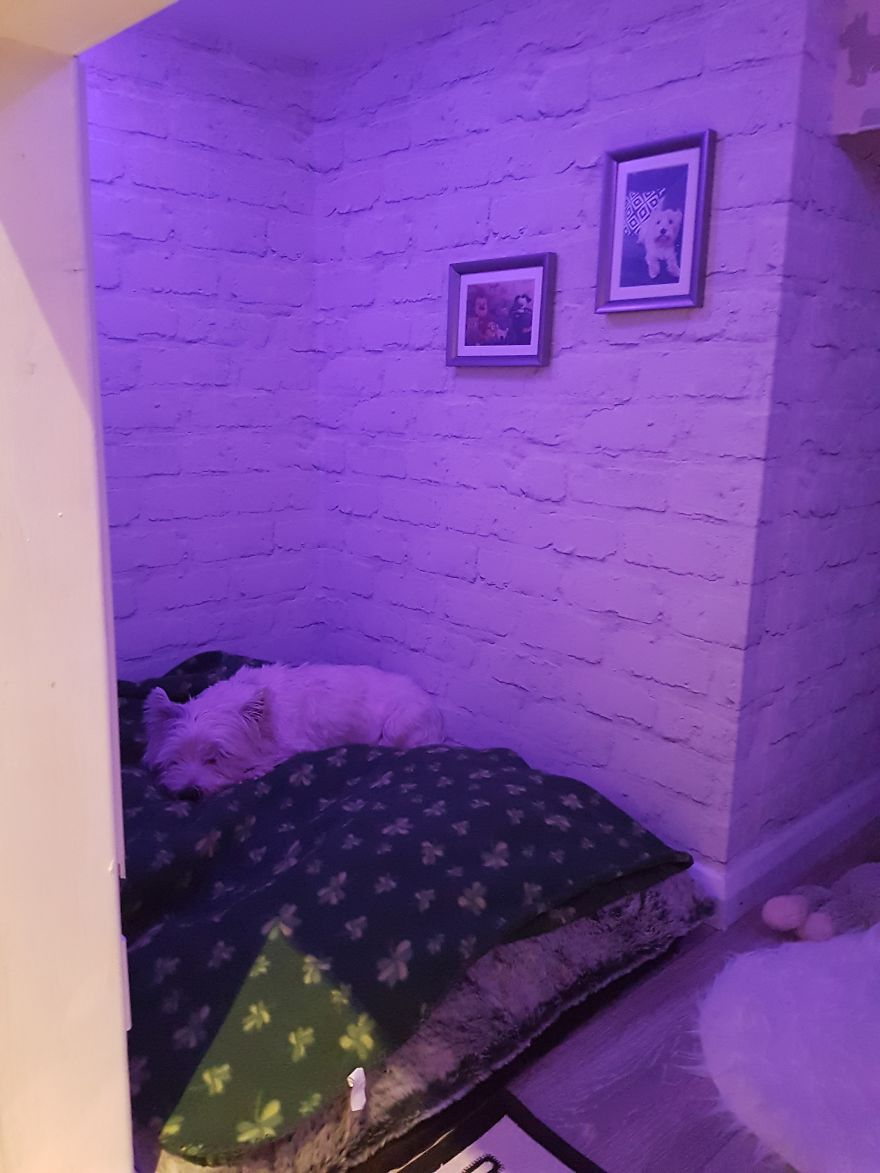 Our Dog Was Getting A Human Sister, So I Built Her A Room Under The Stairs - It Turned Out Better Than Expected
