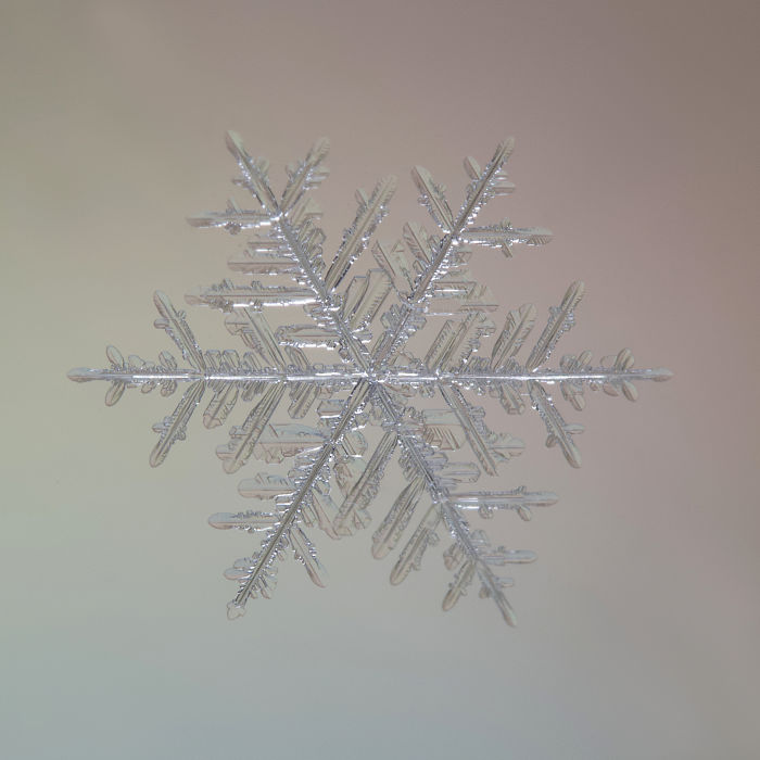 I Photograph The Beauty And Intricacies Of Snow
