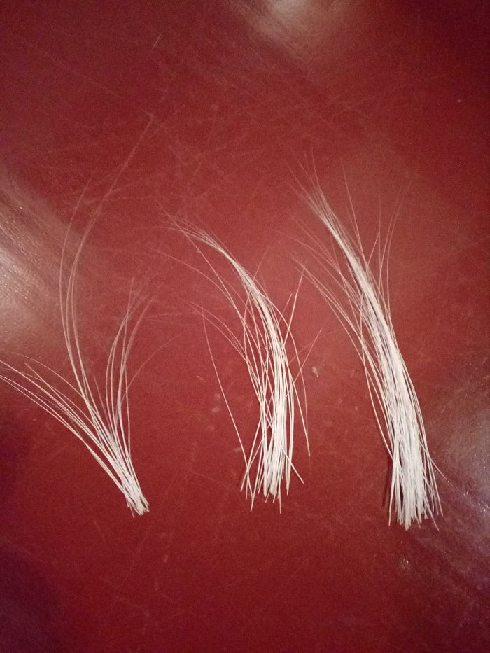 I Collect My Cat's Beard, Which She Drooped Out. :-D Maybe To Make Calligraphic Brush One Day :-D