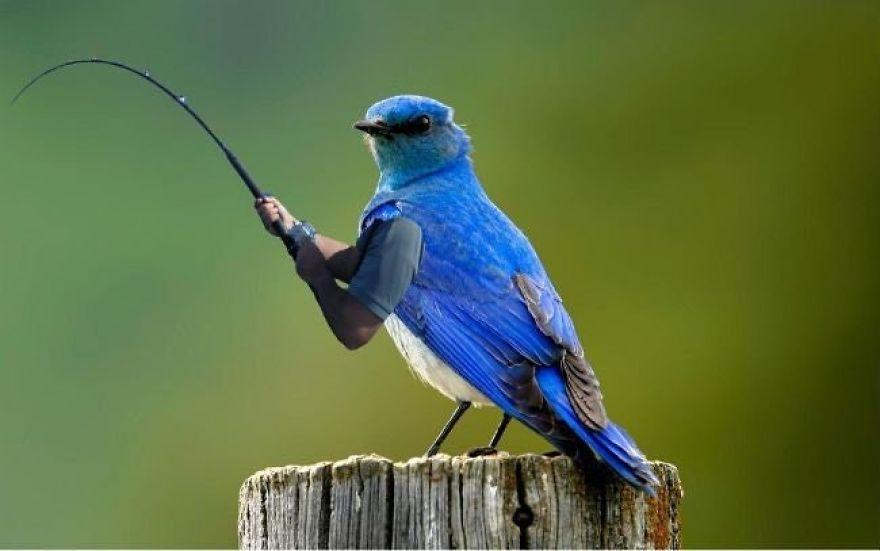 L1G3N1 B1sNEnbQu1Tm61N3S2FPRMaXjqPIdT6kuGs 5a61258f099c0  880 - Kreativitas Netizen Memang Tak Ada Habisnya, Kali Ini Muncul Burung Bertangan Manusia