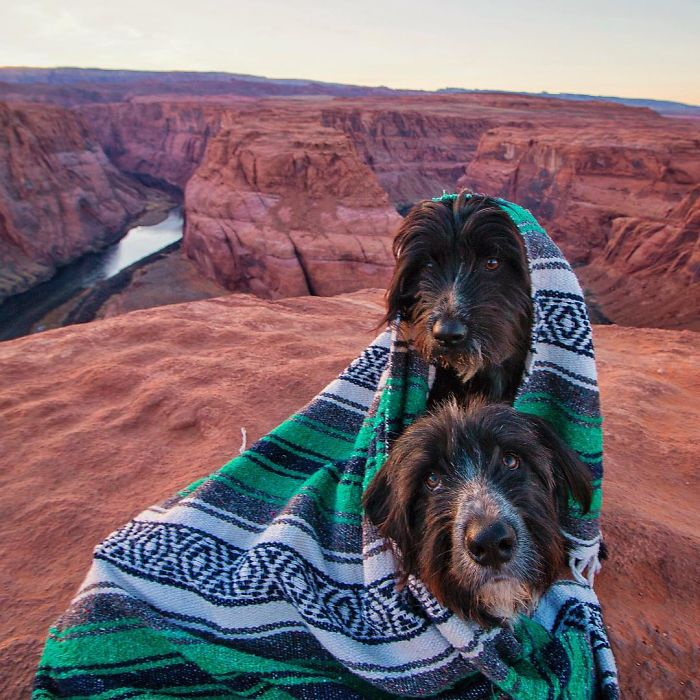 Travel-With-Two-Homeless-Dogs-Jordan-Kahana