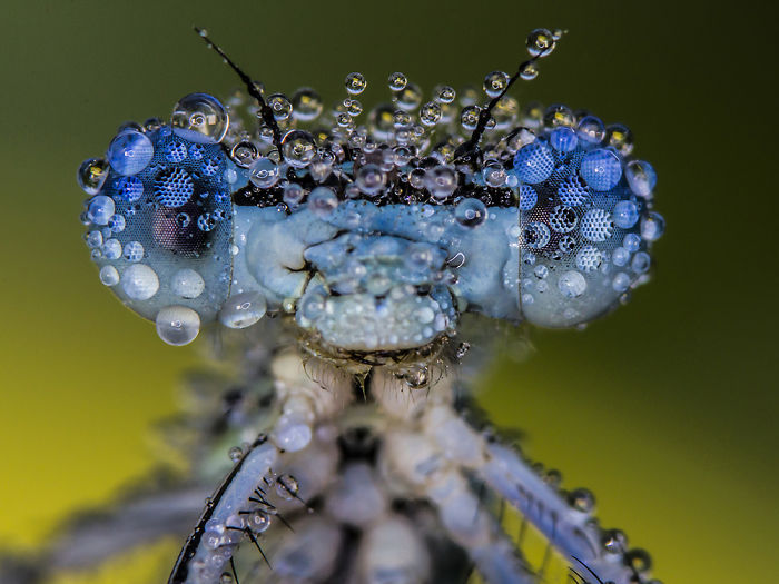 I Photograph Dragons And Damsels