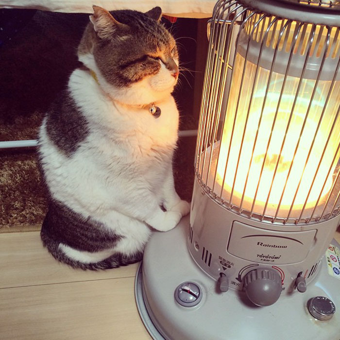 Hilarious Photos Of Cat Falling In Love With A Heater During Cold Weather Will Make Your Day