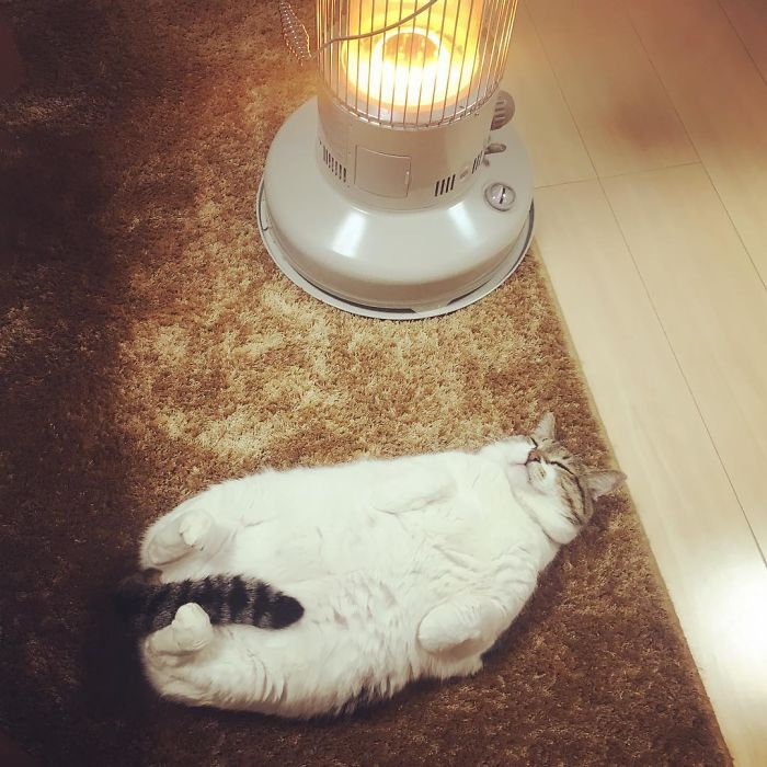 cat-heater-busao-tanryug-9-5a6aeeefaf276
