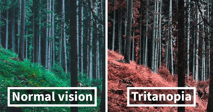 Here S How Colorblind People With Tritanopia See The World