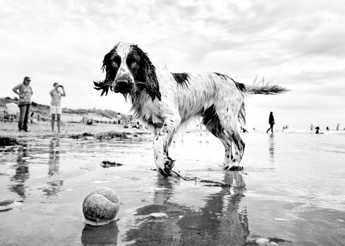 Street Photographer Travels The World Portraying Very Different Personalities Of Dogs