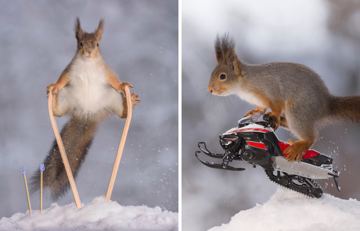 Squirrel Winter Olympics