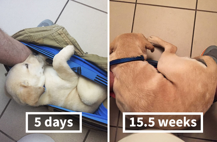 People Can't Stop Laughing At This Dog's Hilarious Growth Chart