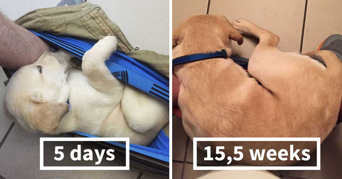 This Puppy Wouldn't Stop Following His Owner To The Toilet, So He Made The Funniest Growth Chart