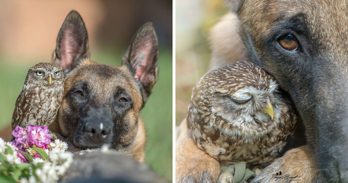 Ingo The Dog Has Made A Ton Of Friends Among Owls, And It's Adorable