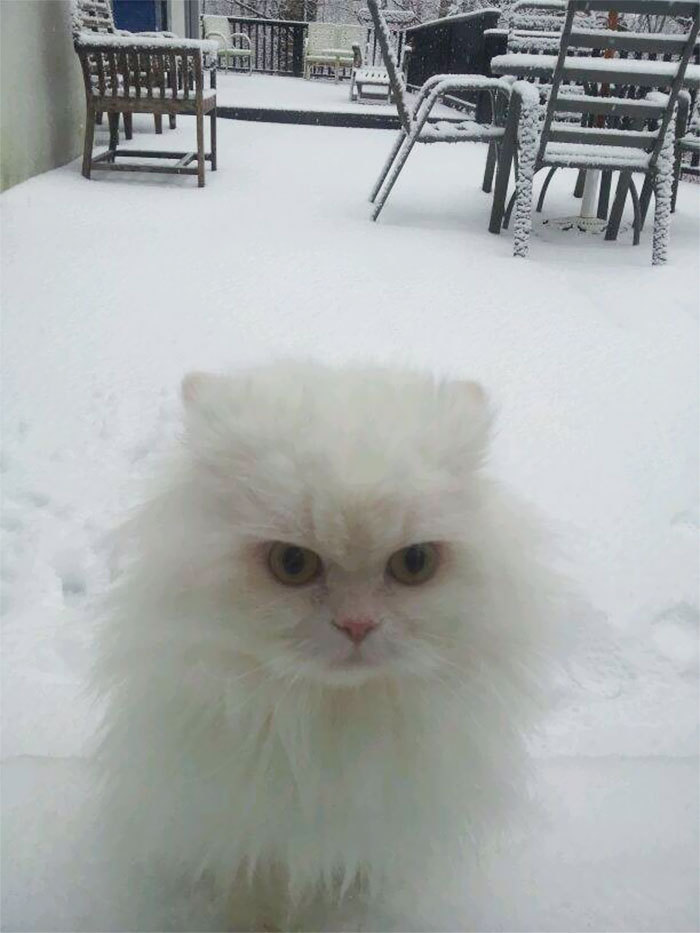 Flour Experienced Snow For The First Time Today. She Is Not Impressed