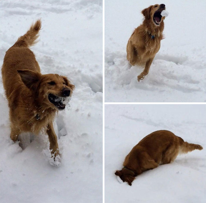 Just My Dog's First Snow
