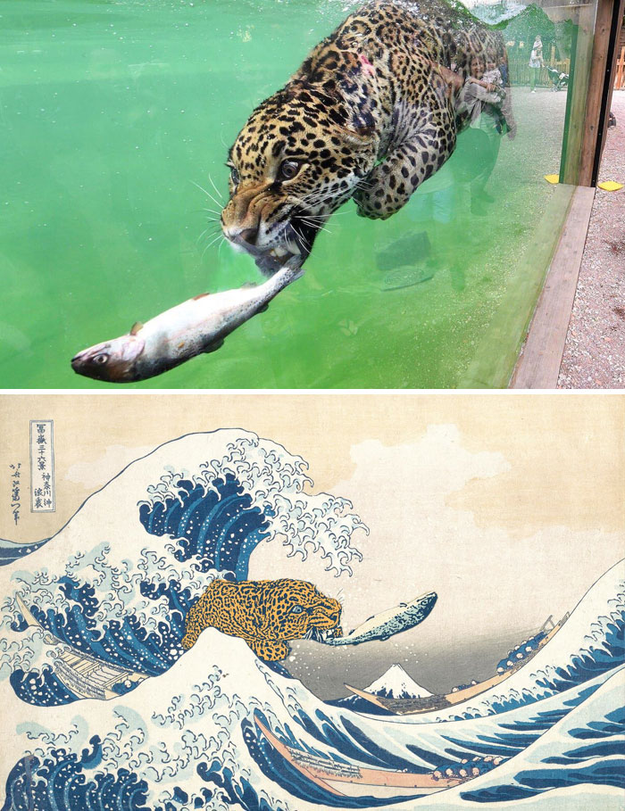 This Leopard With A Fish