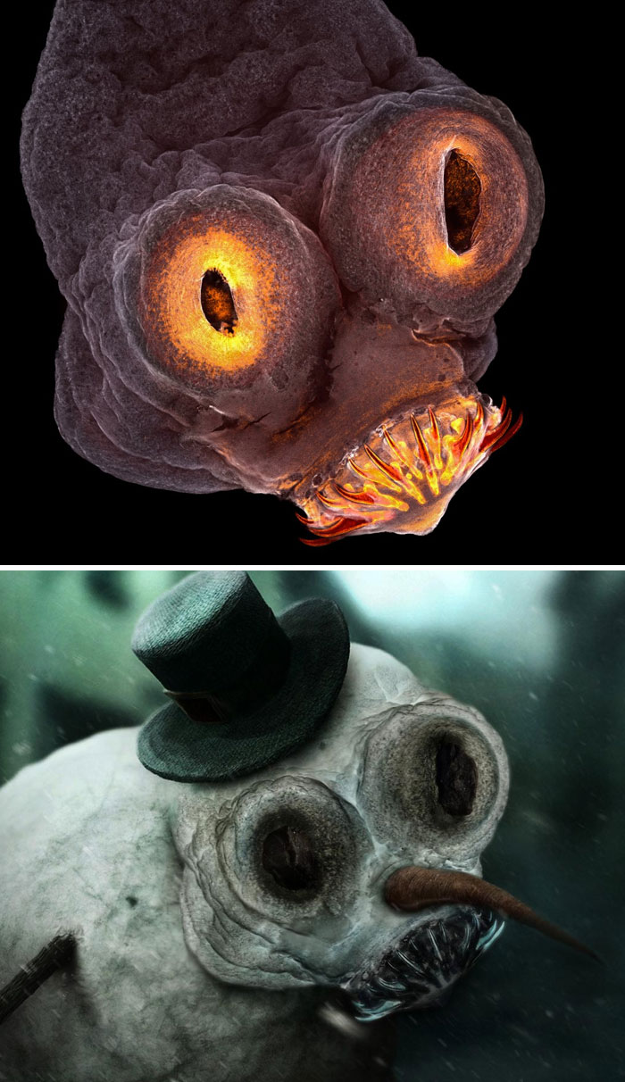 Microscopic Image Of A Tapeworm Head